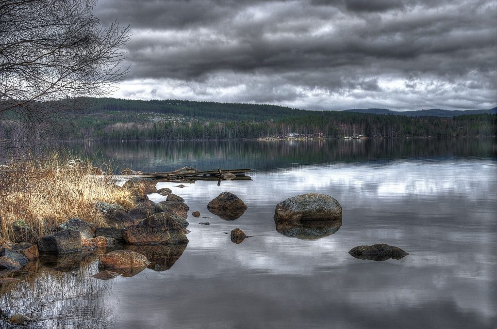 dyster bild över vatten och skog