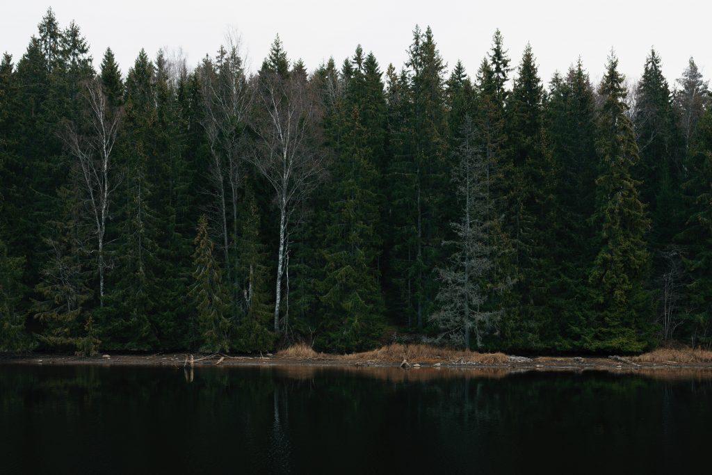 Sjö och skog